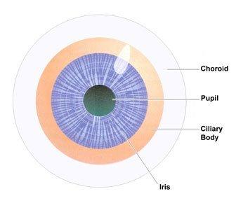 eye parts choroid pupil ciliary body